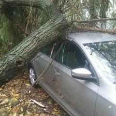 Silný vietor napáchal škody aj v Trnavskom kraji