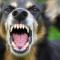 Agresívny pes napadol chlapca v Leopoldove. Zasahoval vrtuľník!
